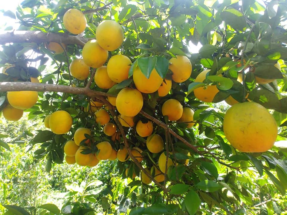Naranja Image